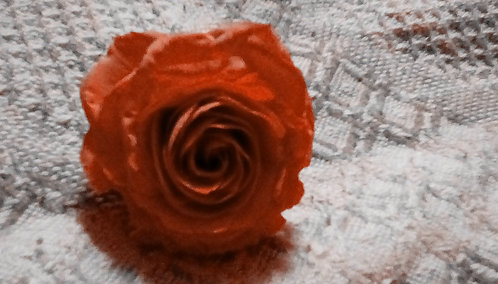 """ORANGE ROSE 4"""""""