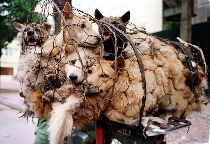 Mans Best Friend, but not in Yulin China.