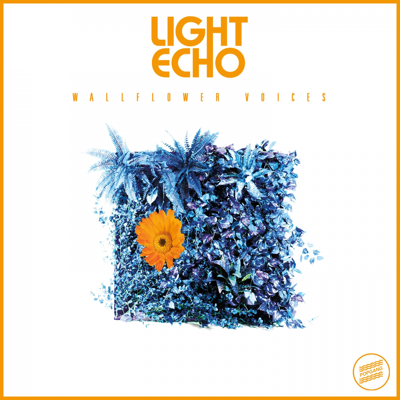 Light Echo - Wallflower Voices