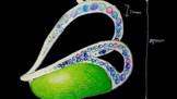 Jewelery Design 翡翠
