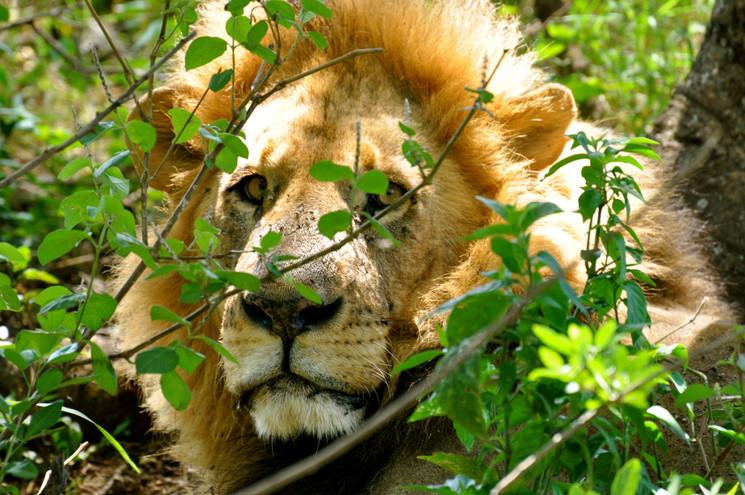 Guided Safaris