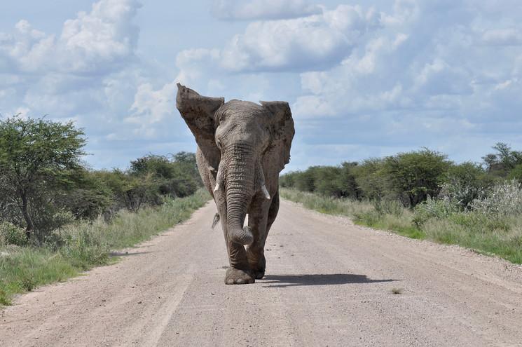 Self Drive Safaris