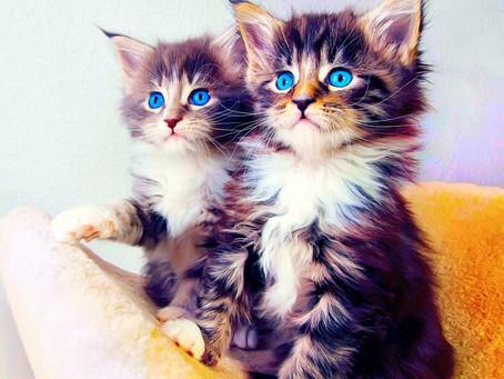 Understanding Feline Language