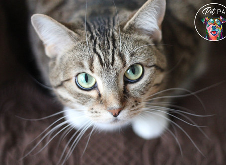 10 Signs Your Cat Loves You!