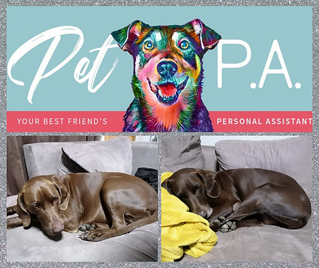 Pet P.A. - German Shorthaired Pointers.p