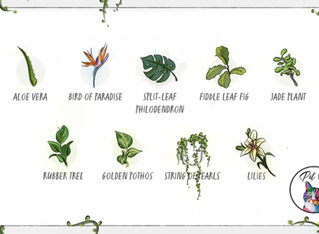 Guide To Toxic Plants