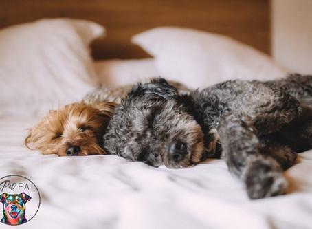The Advantages of Pet Sitting versus Other Pet Care Options