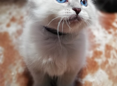Bringing Your New Kitten Home
