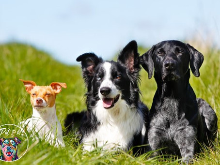 Managing a Multi Dog Household