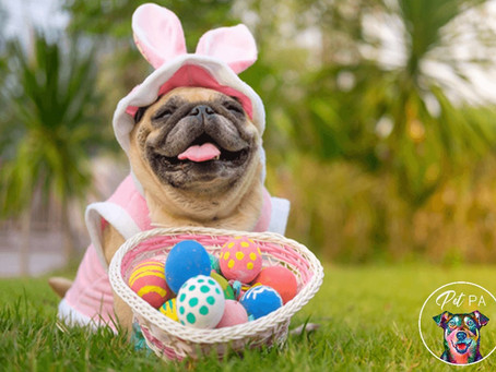 Tips for Having a Safe & Fun Easter With Your Pets
