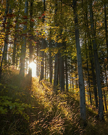 Unternehmenswald pflanzen