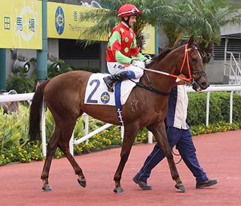 Beware first-time runners in Hong Kong unless you have the right trainer
