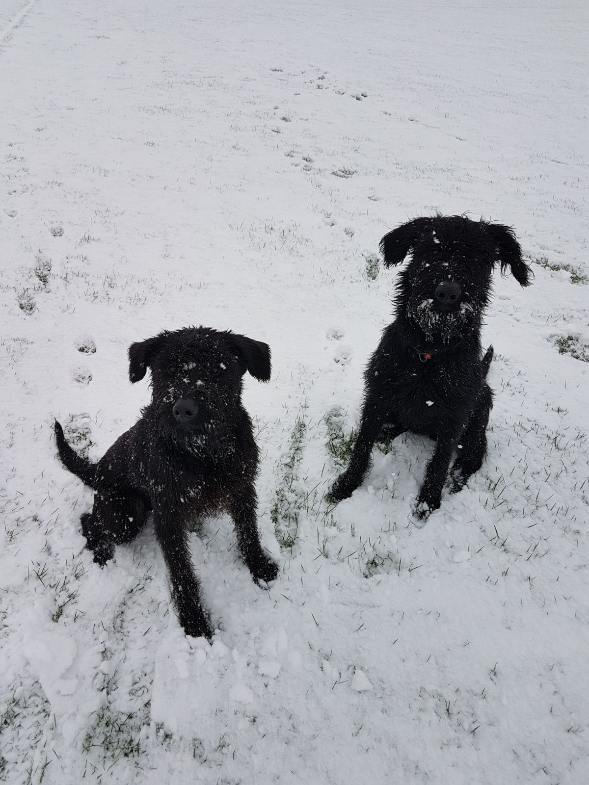 Dog Handling VINOVIUM ASSOCIATE