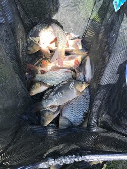 Fish at Eden Grange Fisheries