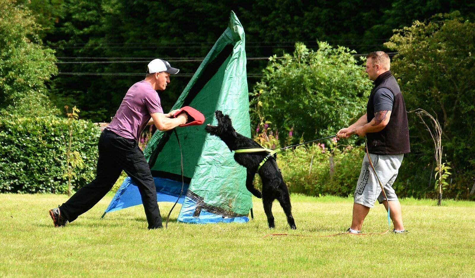 Dog Handling VINOVIUM ASSOCIATES