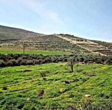 مزرعة للبيع في المفرق قرية خطلة مزروع فيها زيتون و تين بسعر مغري