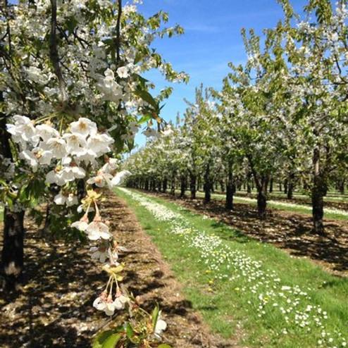 Heritage Orchard Walks