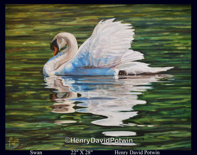 """Swan  - 2010 22X28"""""""