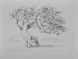 """Asana Tree 10 X 14"""""""