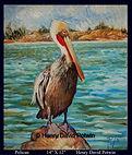 Henry David Potwin Pelican