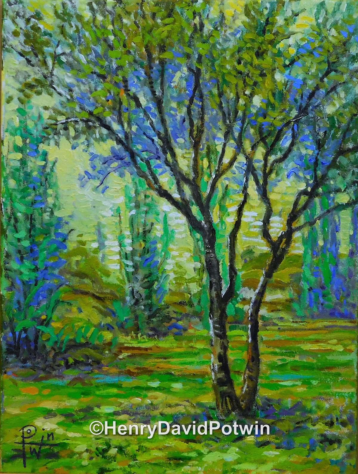 Study of a Tree