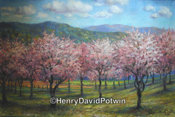 Cherry Orchard  - 2004 24X36""