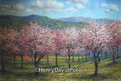 2004 Cherry Orchard
