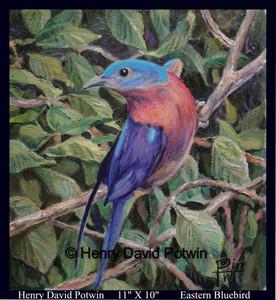"Eastern Bluebird  - 2008 11X10"""
