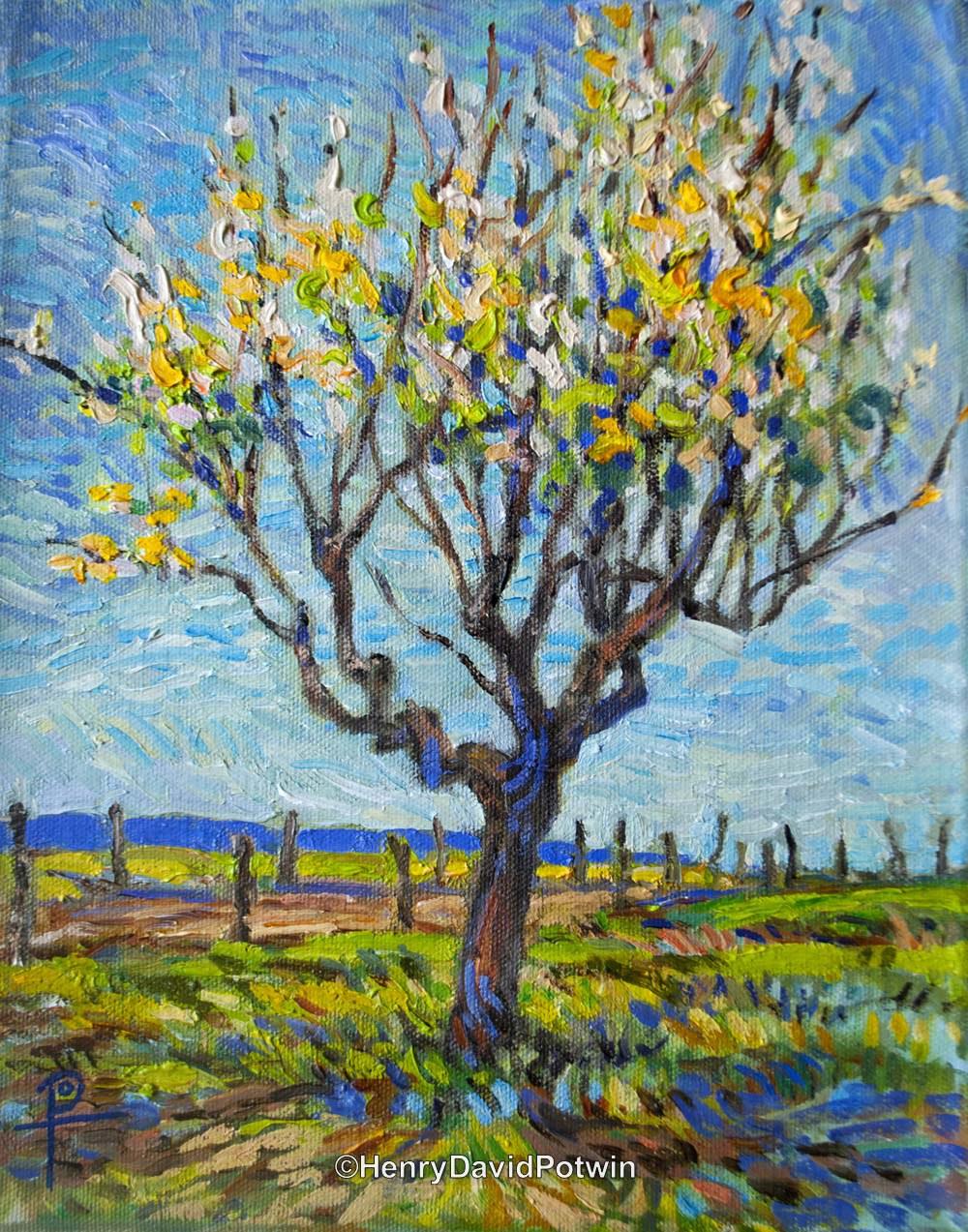 """Apricot Tree - 2013 9X11"""""""