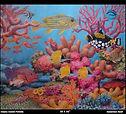 Sulawesi Reef 30X36