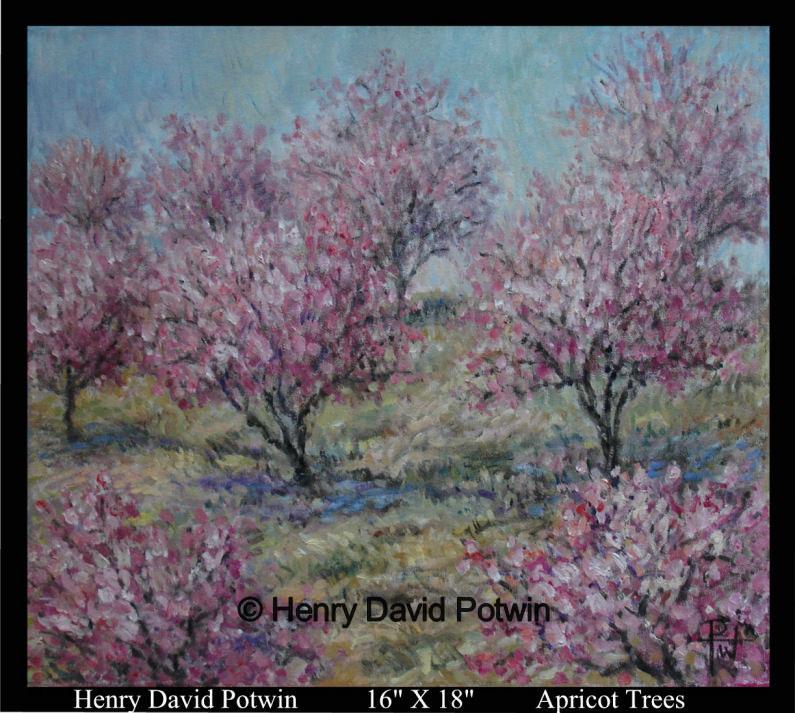 Apricot Trees