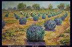 Study For Lavender farm