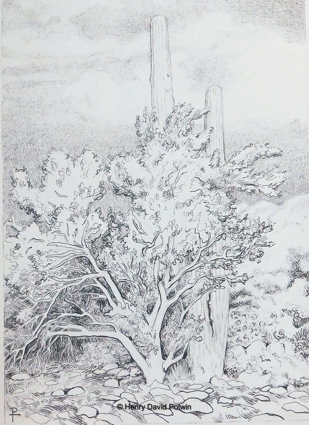 """Saguaro in the Bush - 2017 11X15"""""""