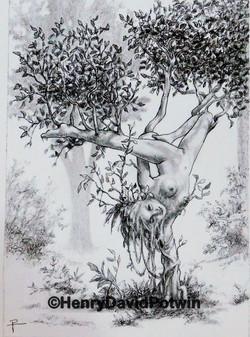 2017 Tree Asana #2