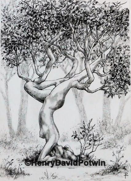 Tree Asana 15