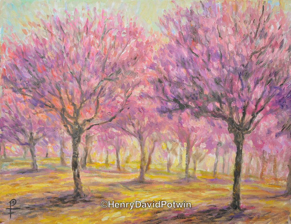 Orchard in Bloom - 2014 11X14""