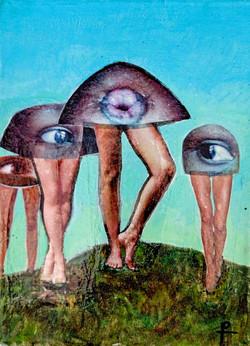 Mushrooms 11X8
