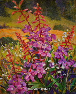 2013 Wildflowers