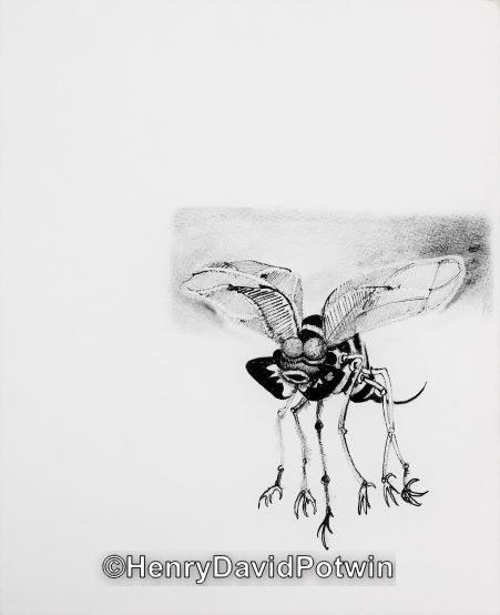 """Untitled (Bug ) -  12X10"""""""