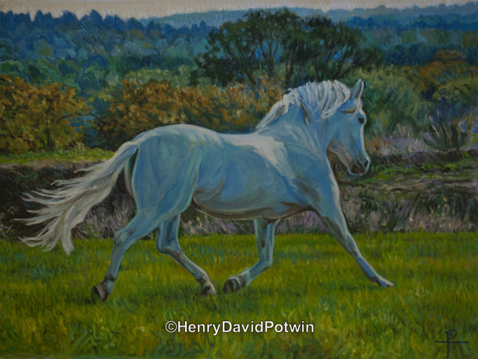 """Andalusian - 2012 18X24"""""""