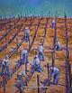 Preparing Root Stock