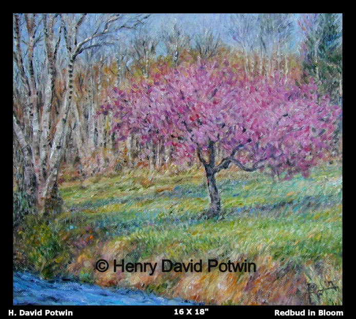 Redbud in Bloom  - 1990's 16X18""