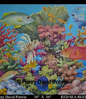 Henry David Potwin Red Sea Reef