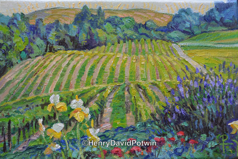 Vineyard in Napa California - 2014 8X12""