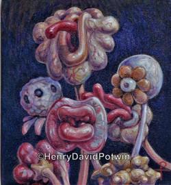 Meat Flowers 11x10  2010