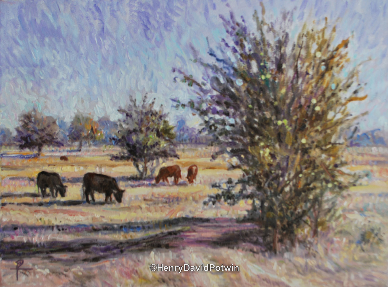 Cattle at Pasture - 2013 12X16""