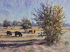 Cattle at Pasture