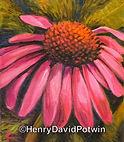 Henry David Potwin Cone Flower