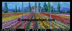 Flowers for Market  3 Panels