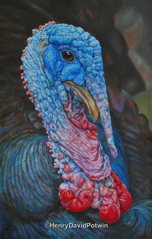 Turkey Boy